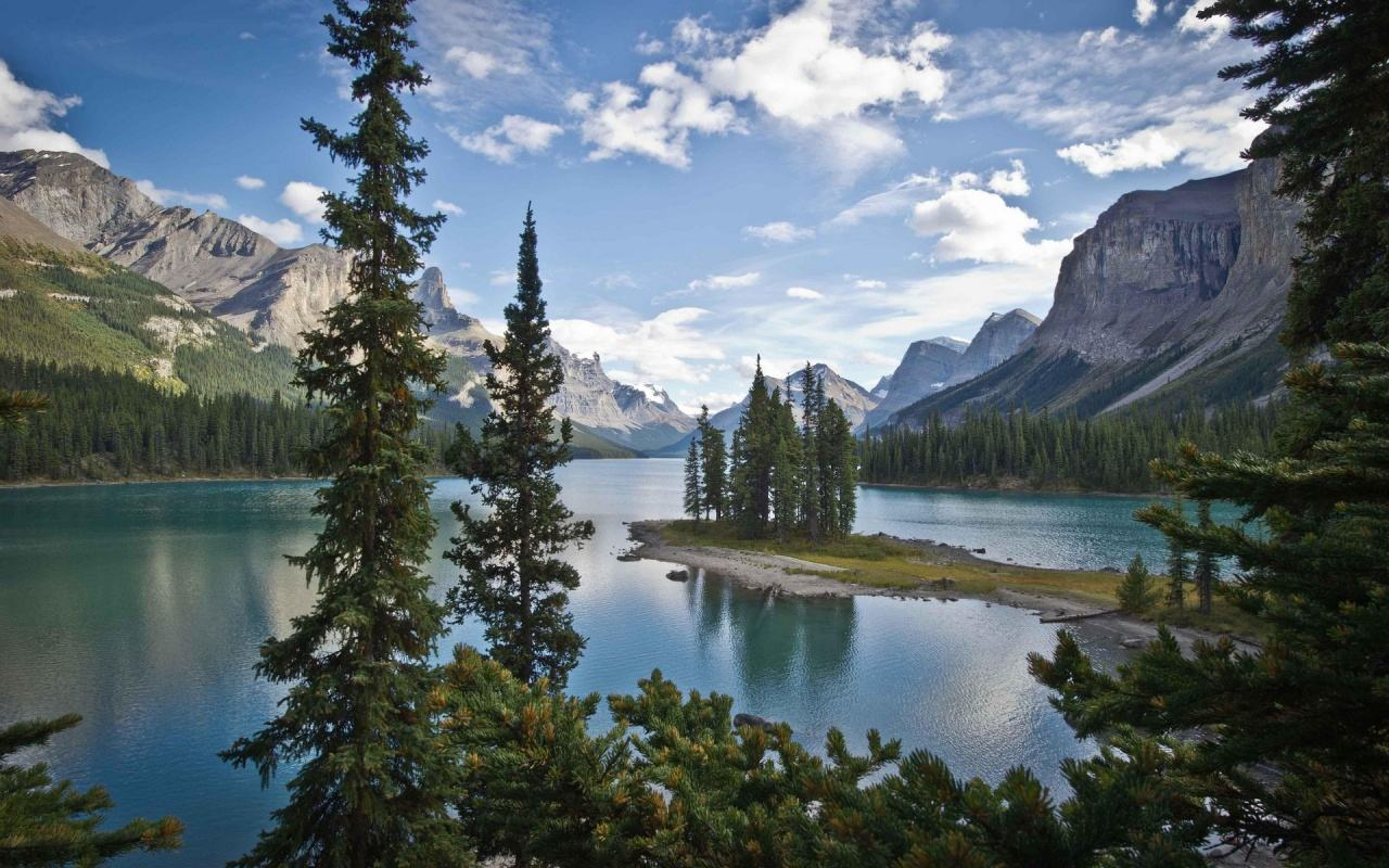 جنگل درخت رودخانه کوه برفی کانادا